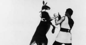 Wintergartenprogramm: Das boxende Känguruh