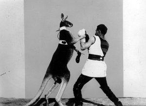 Das boxende Känguruh, Quelle: BArch, DIF