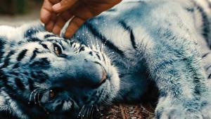 Der blaue Tiger, Quelle: Farbfilm Verleih, DIF, © Farbfilm Verleih