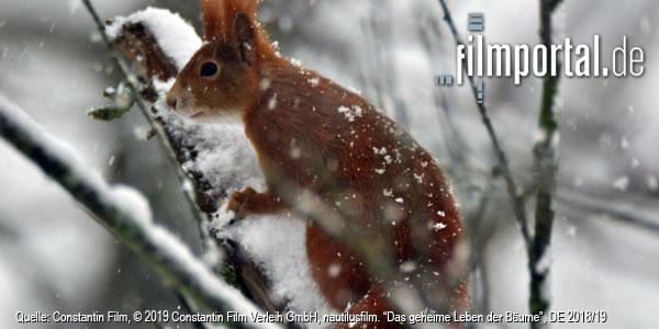 Quelle: Constantin Film Verleih, DFF, © 2019 Constantin Film Verleih GmbH, nautilusfilm
