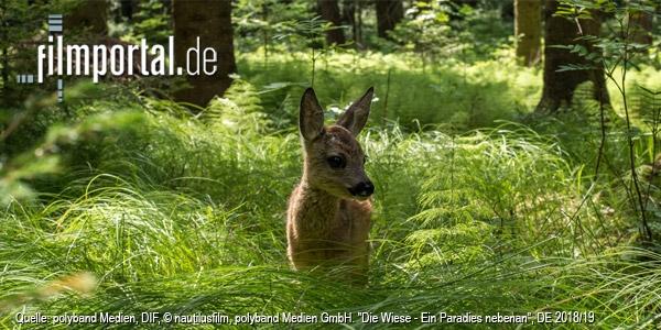 Quelle: polyband Medien, DIF, © nautilusfilm, polyband Medien GmbH